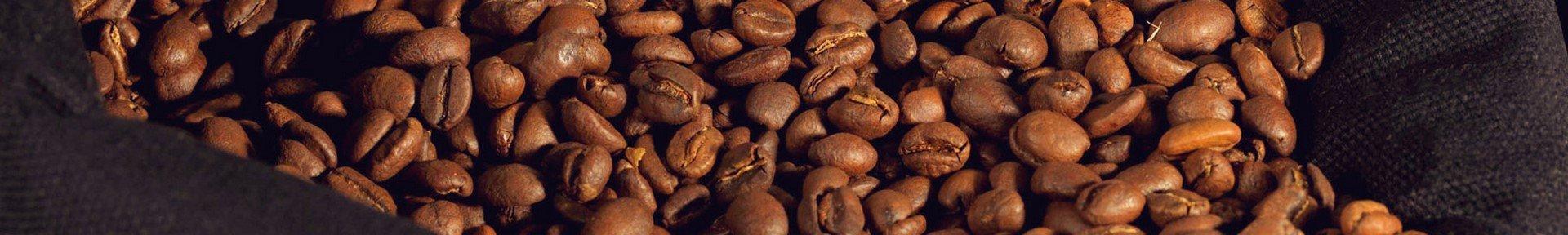 Graines de café Voisin